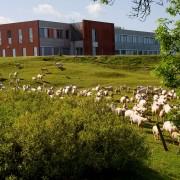 L'hôtel d'entreprise l'Arobase à Castres - Extérieur du bâtiment : les moutons - Cowork'in Tarn le réseau du télétravail et coworking Tarnais